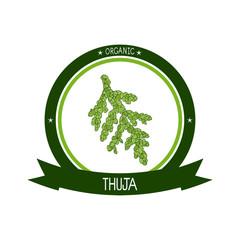 Thuja. Branch. Sketch. Color pattern. Logo, emblem, sticker