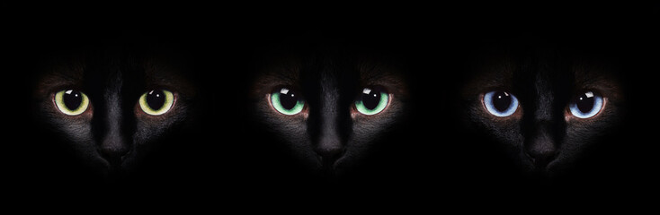 Eyes of the siamese cat in the darkness. Different eyes collage. Wall mural