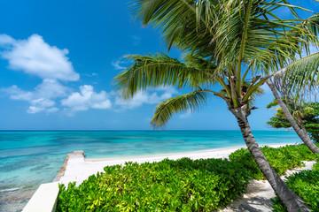 Sunny beach with tropical palms