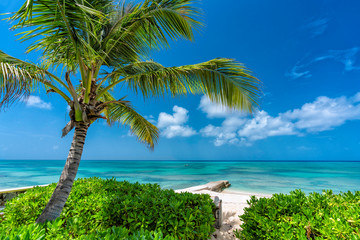 Sunny tropical beach with palm tree, clear ocean water