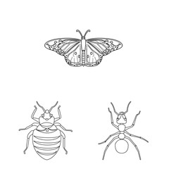 Isolated object of insect and fly icon. Collection of insect and element stock vector illustration.