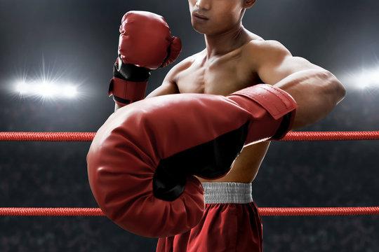 Strong muscular boxer
