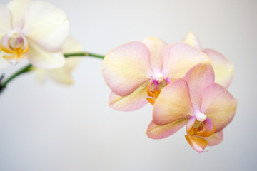 Bright orchid blossom against a white background