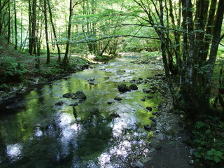 The pure mountain river flows smoothly through the woods