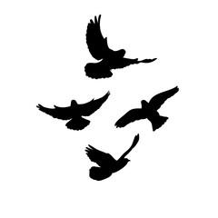 silhouette, flying flock of birds