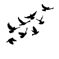 vector isolated flying flock of pigeons silhouette black