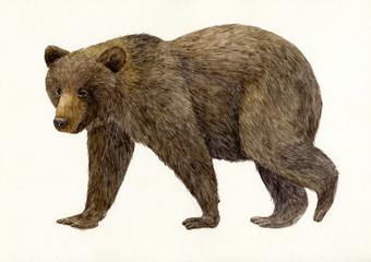 곰 / bear
