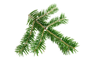 Evergreen branch of Christmas tree