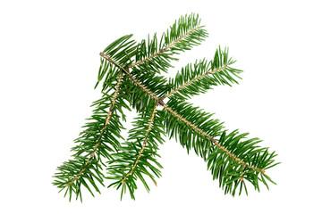 Evergreen branch of Christmas tree