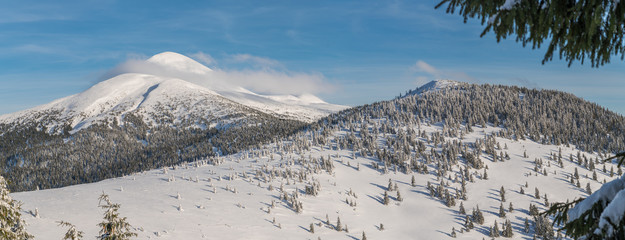 Mount Goverla, Ukraine. Beautiful winter landscape. Tops of mountains covered with snow and green firs at the foothills.