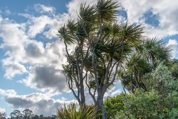 Waikowhai greenery