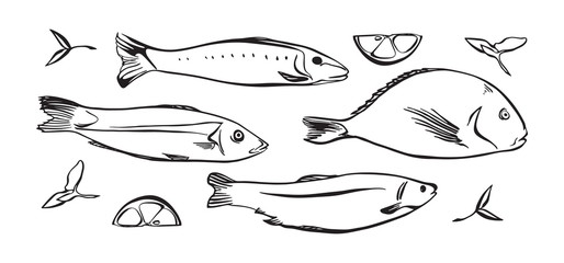 Hand drawn vector illustration of seafood. Fish with lemon and herbs. Black isolated on white background