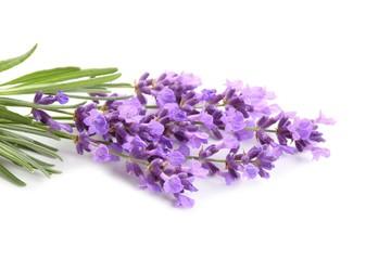 Bouquet of lavender.