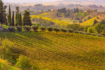 tuscany landscape with vineyards, cypress trees