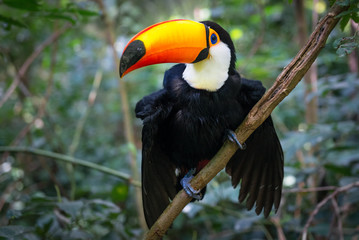 Colorful toucan in the aviary
