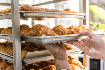 close up of male baker hands holding baking tray with croissants