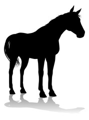 A horse animal detailed silhouette graphic