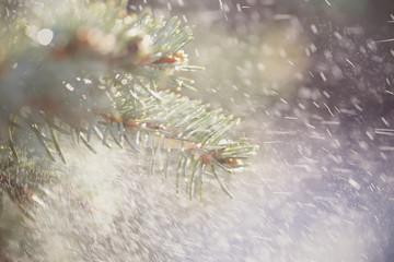 дождь снег идёт на улице рядом дерево ель фоновое изображение