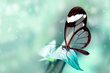 Foto op Aluminium Vlinder Beautiful butterfly sitting on flower in a summer garden