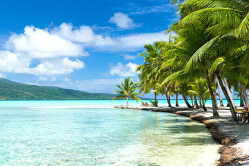 travel, seascape and nature concept - tropical beach with palm trees and sunbeds in french polynesia