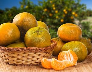 Mandarine orange or tangerine on wooden board and tree background.