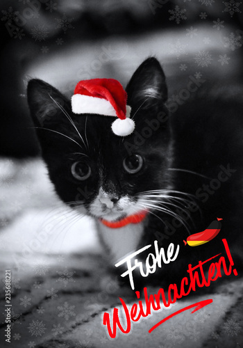 Weihnachten Funny.Cute Little Black With White Christmas Kitten A Funny Kitten With