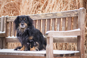 Mixed breed dog portrait at winter