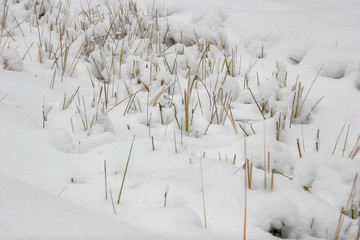 Grass cowered with snow in winter time.