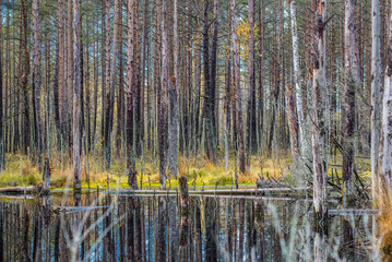 The forest river landscape. Cloudy autumn day, Latvia