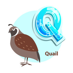 Q Letter with Quail Bird for Alphabet Learning
