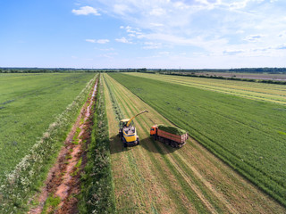 Harvester pours silage into track trailer. Work is in endless field during harvest time. Green fodder is to feed cows. Agriculture in Russia