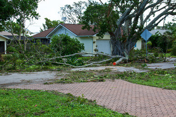 View of downed trees in front of house and hurricane irma damage in florida.