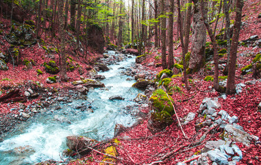 Autumn in the Pollino National Park. Beautiful passage of a river in the middle of the forest with fallen red leaves Fotomurales