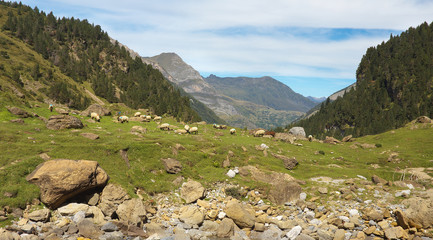 Flock of sheep on the stony meadow in the mountain valley nearby resort of Gavarnie, Pyrenees