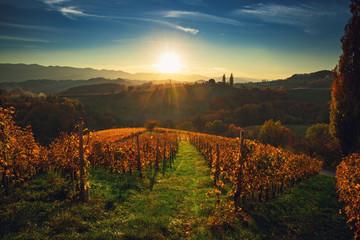 Wineyards fields, sunset view from Spicnik near Maribor