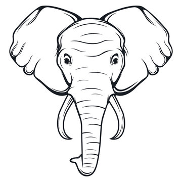 Elephant Head Drawing Stock Photos And Royalty Free Images Vectors And Illustrations Adobe Stock