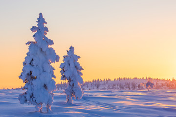 Beautiful winter landscape with snow-covered trees in Lapland
