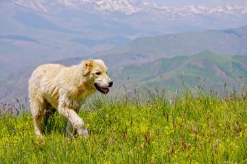 Dog walking by grass