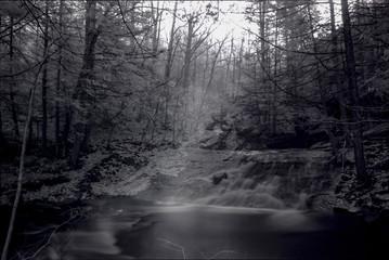 Deep Dark Mystical Forest In True Near Infrared Exposure