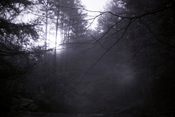 Sun Penetrates Fog And Forest Trees, Infrared Photography In Mystical Forest