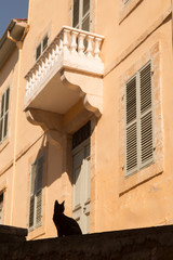 Silhouette of cat by building in Paphos, Cyprus