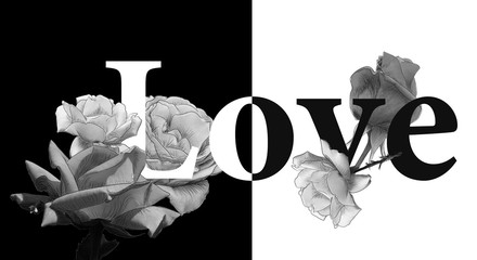 Monochrome_concept_love_roses_black_and_white_by_jziprian.jpg