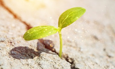 Little plant growing out of asphalt, close-up