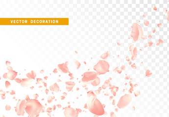 Pink flower petals are flying circling isolated on transparent background