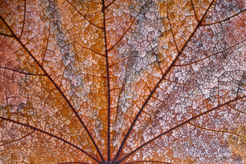 Background and texture of dry autumn leaves