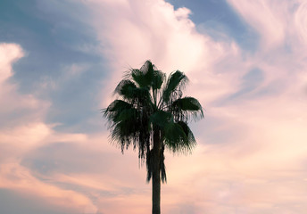 Palm tree against the sky with clouds
