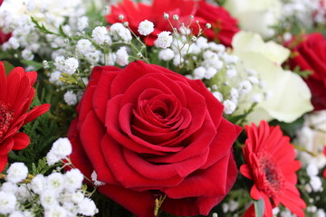Macro closeup of colorful bouquet with red blooming roses and baby´s breath (Gypsophila paniculata), copy space for text, concept of wedding, valentine´s day or women´s day