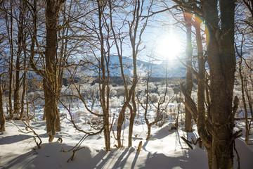bosque nevado de montañas y sol en el amanecer ushuaia argentina