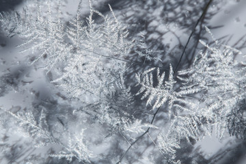 Closeup picture of a beautiful silver frozen branch
