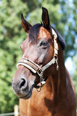 Head of a healthy sport horse during dressage at rural equestrian center